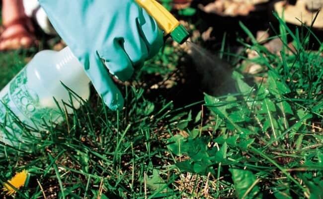 Using Vinegar In Gardens